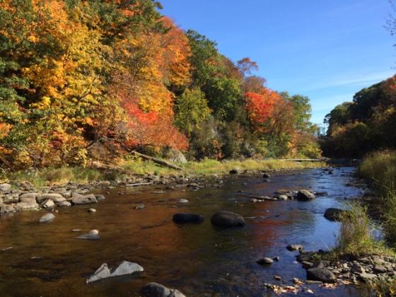 stream with trees in orange, yellow fall foliage