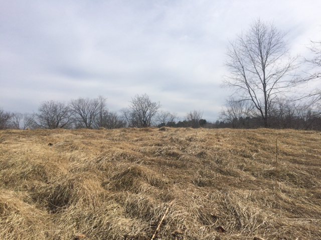 field of dry grasses with trees in background
